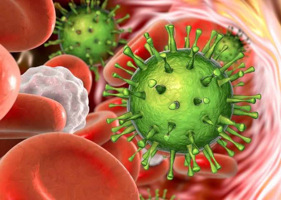 Citomegalovirus: ecco come il sistema immunitario può sconfiggere l'infezione
